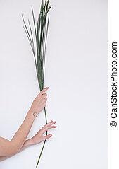 árvore palma, folha, em, mãos, de, um, menina