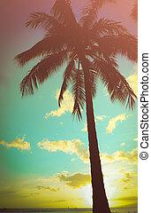 árvore palma, retro, havaiano, denominado