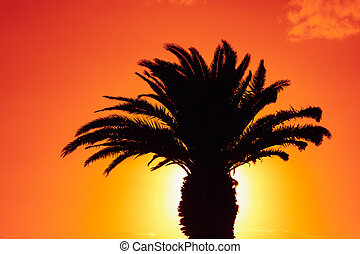 árvore palma, silueta, contra, amanhecer, fundo