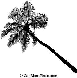 árvore palma, silueta