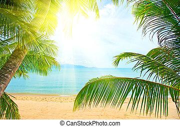árvore palma, sobre, areia praia