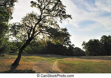 árvore, parque