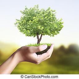 árvore pequena, planta, mão