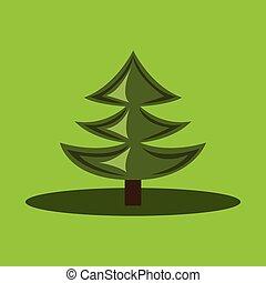 árvore pinho, desenho