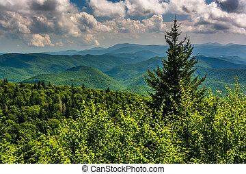 árvore pinho, e, vista, de, montanhas appalachian, de, a, cume azul
