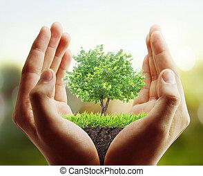 árvore, planta, mão