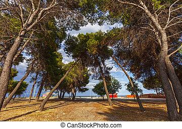 árvore, praia