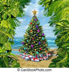 árvore, praia, celebração natal
