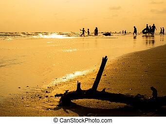 árvore, praia, silueta, secado