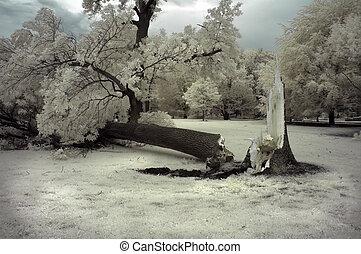 árvore quebrada