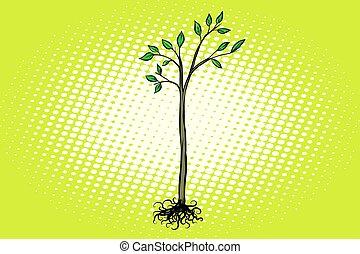árvore, seedling, com, verde sai