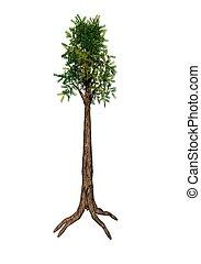 árvore sequoia