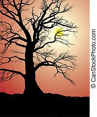 árvore, silueta, antigas, pôr do sol