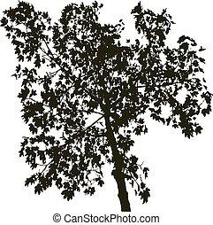 árvore, silueta, isolado, branca