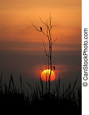árvore, silueta, pôr do sol, pássaros