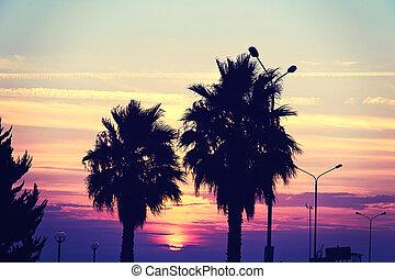 árvore, silueta, pôr do sol, paraisos