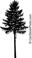 árvore., silueta, pinho
