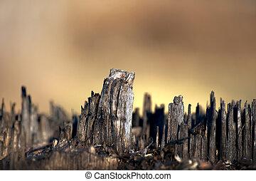 árvore, skyline, toco