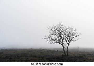 árvore, solitário, paisagem, nebuloso