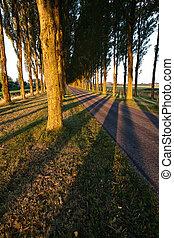 árvore, sombras, padrão, ligado, estrada