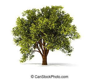 árvore, summerl, 3d