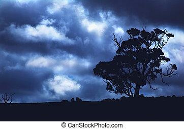árvore, tempestuoso