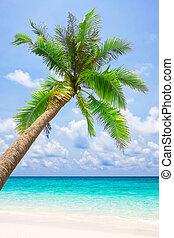 árvore, tropicais, areia, palma, praia branca
