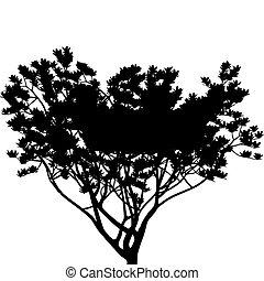 árvore, (vector)