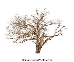 árvore velha, isolado, morto, fundo, branca