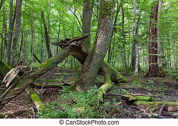 árvore velha, quebrada, ramo, cinza, mentindo