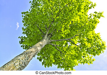 árvore verde