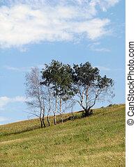árvore verde, campo