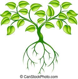 árvore verde, e, raizes