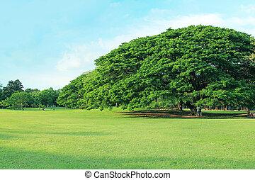 árvore verde, em, tropicais, jardim