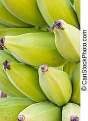árvore, verde, jovem,  banana