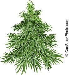 árvore verde, pinho