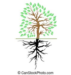 árvore verde, raiz