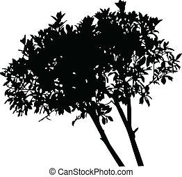 árvore, vetorial, -