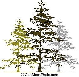 árvore, vetorial, cedro, modelo, logotipo, desenho