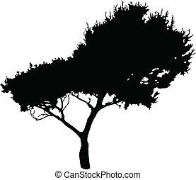 árvore, vetorial, -, ilustração