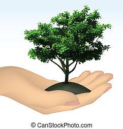 árvore., vetorial, mão humana