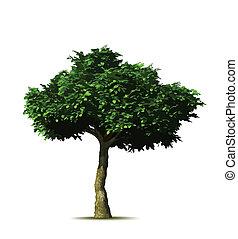 árvore., vetorial, verde