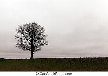 árvores, anoitecer