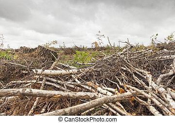 árvores, após, a, furacão