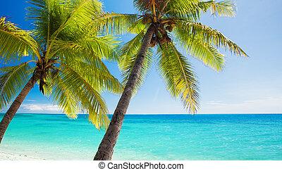 árvores azuis, palma, negligenciar, lagoa
