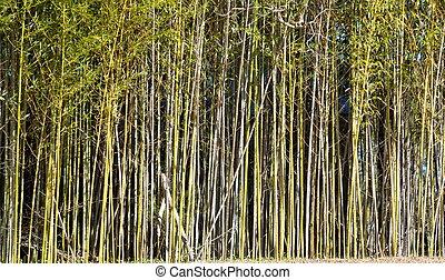 árvores bambu