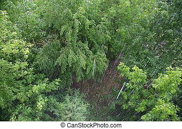 árvores, chuva