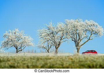 árvores, com, cristais gelo