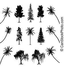 árvores, com, raizes, e, palmas