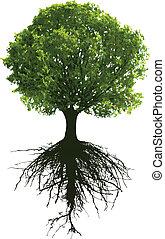 árvores, com, raizes